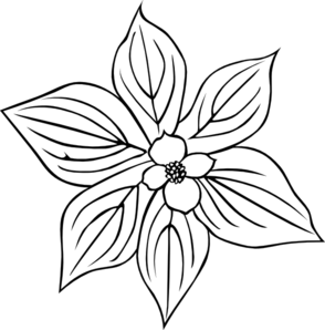 Dogwood vector pacific. Creeping coloring page clip