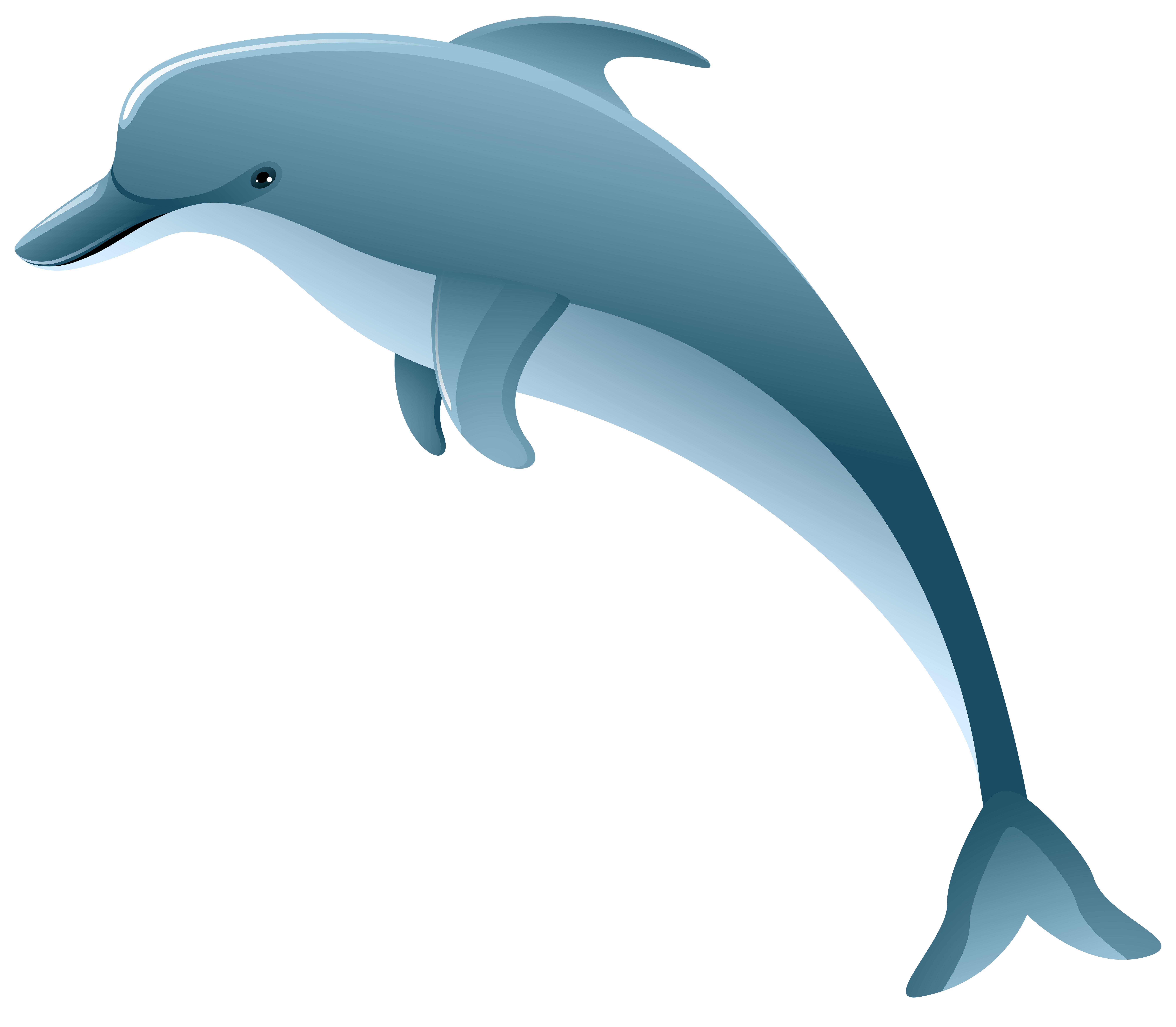 Dolphin clipart dolphin tail. Realistic free pencil and