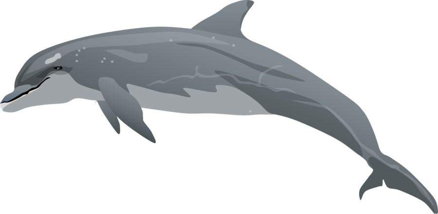 Porpoise drawing pencil. Bottlenose dolphin clipart