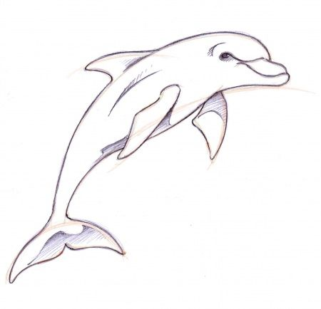 Dolphin tattooed pinterest drawings. Drawing clipart art drawing image library download