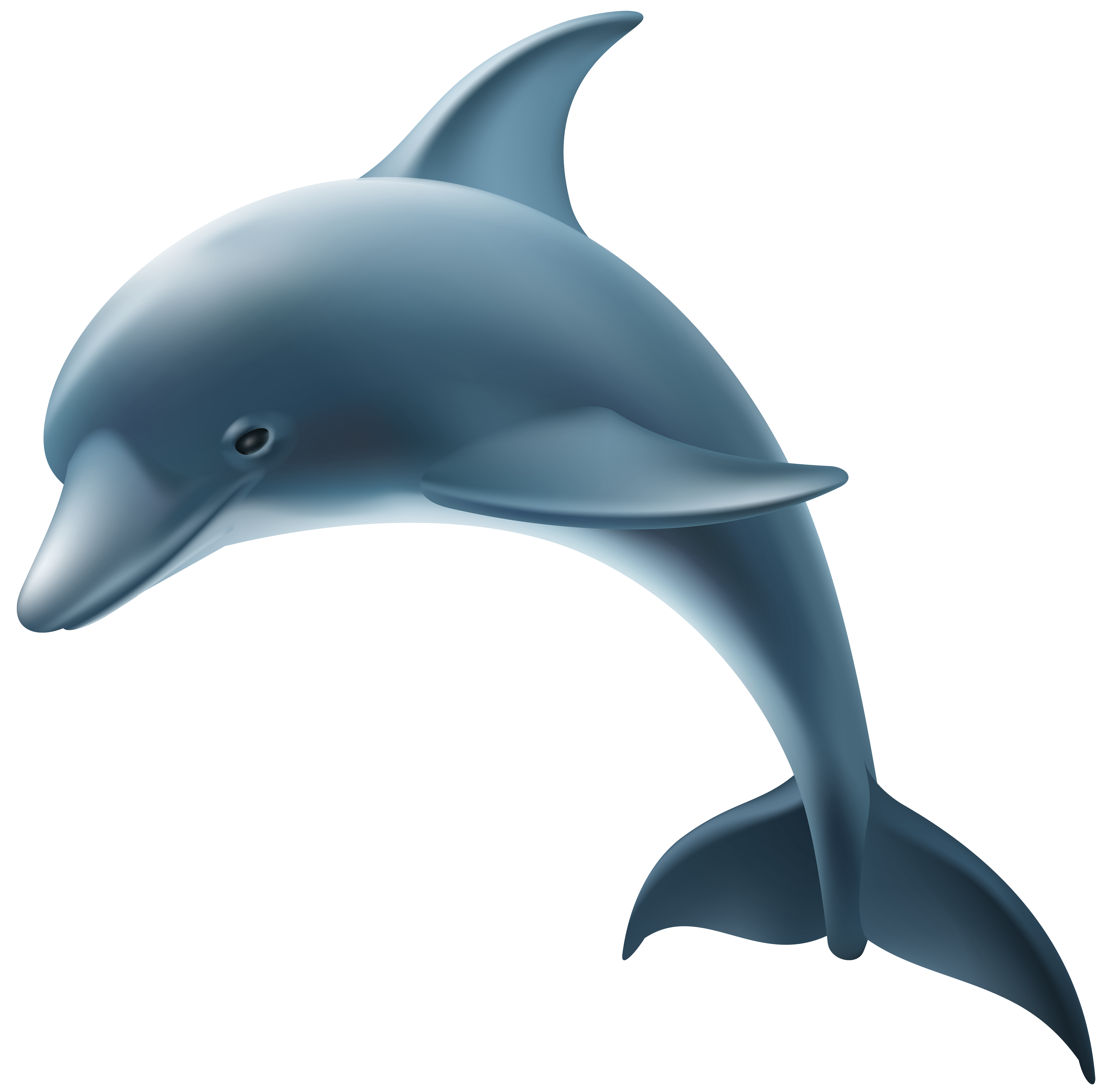 dolphin transparent png
