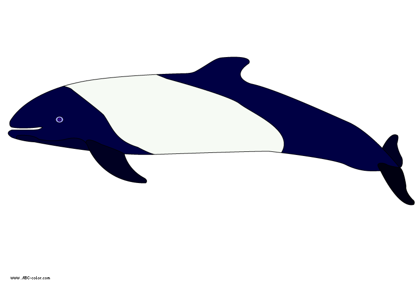 Dolphin clipart real dolphin. Raster commerson s
