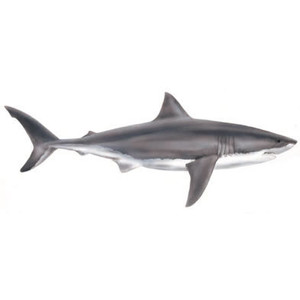 Dolphin clipart shark. Realistic free real clipartsgramcom