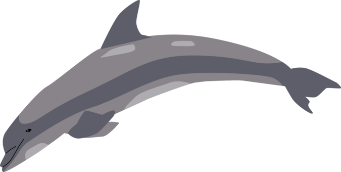 Porpoise drawing bottle nose dolphin. Common bottlenose shark vertebrate