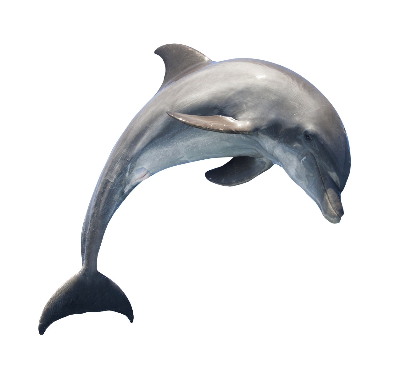Dolphin jumping png. Transparent free images only