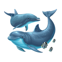 Dolphin png. Download free photo images
