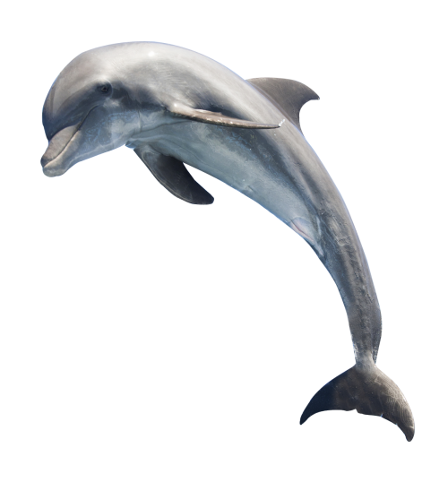 Dolphin png. Image pngpix