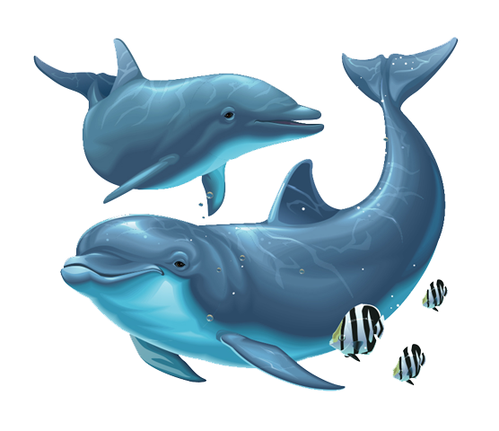 Dolphin png. Transparent images all file