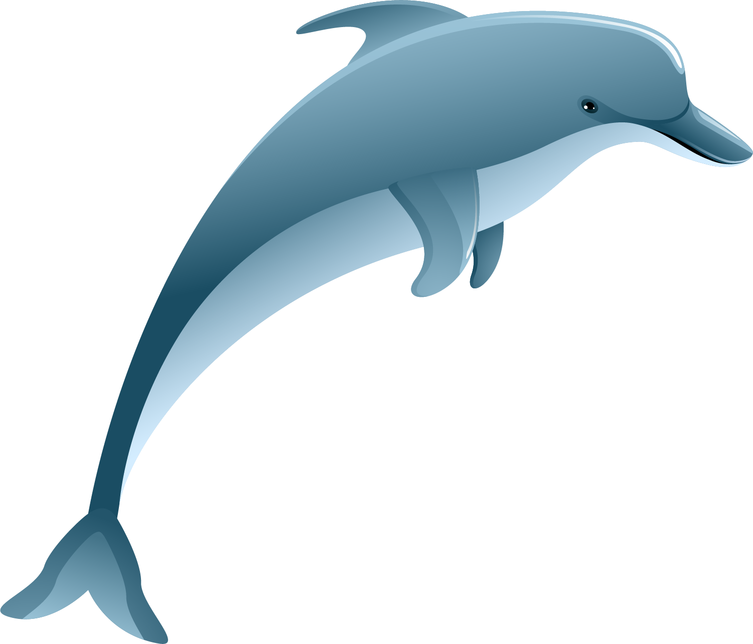 Dolphin tail png. Common bottlenose tucuxi rough