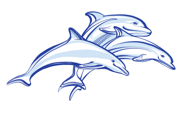 Dolphin tail png. Dolphins all about dolphinspng