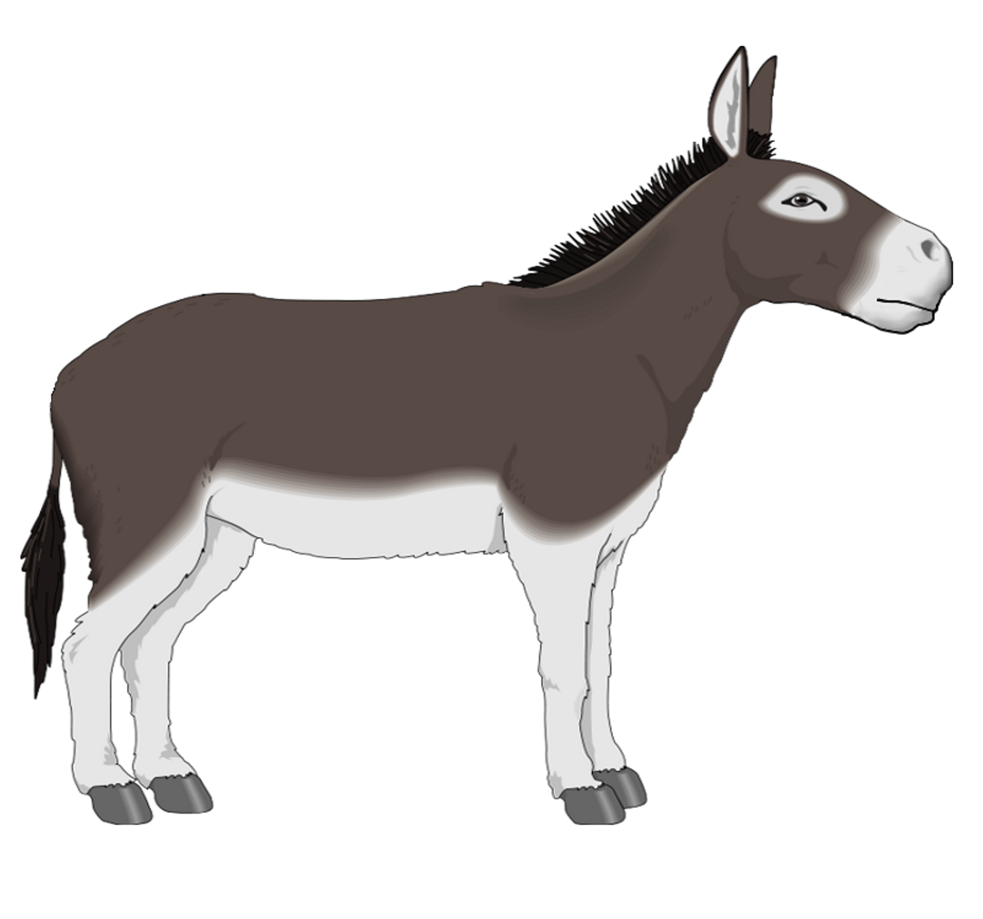 Domkey. Free donkey clipart download