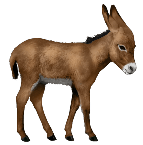 Donkey clipart transparent background. Png free images toppng