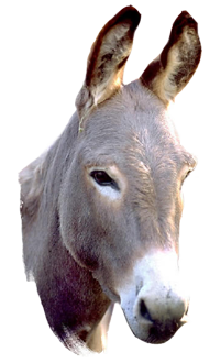 Donkey clipart transparent background. Png