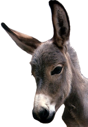 Donkey head png. Images free download