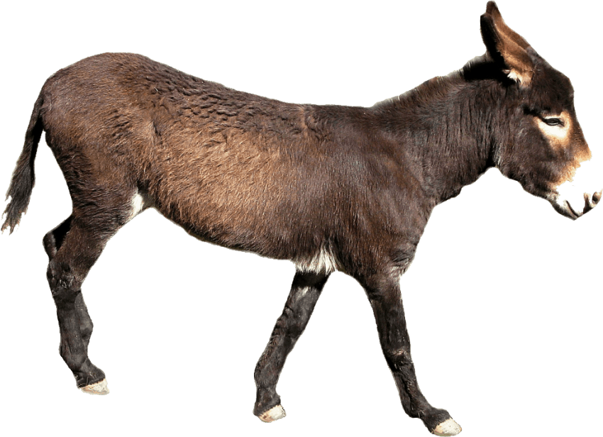 Donkey png. Download images background toppng