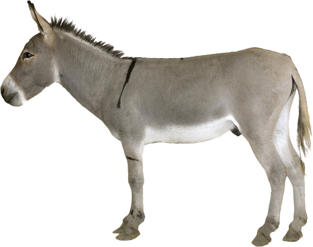 Donkey png. Transparent vector clipart psd