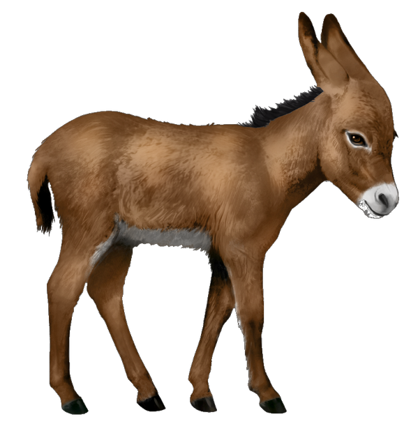 Donkey png. Download free image with