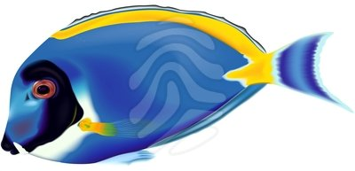 dory clipart blue fish