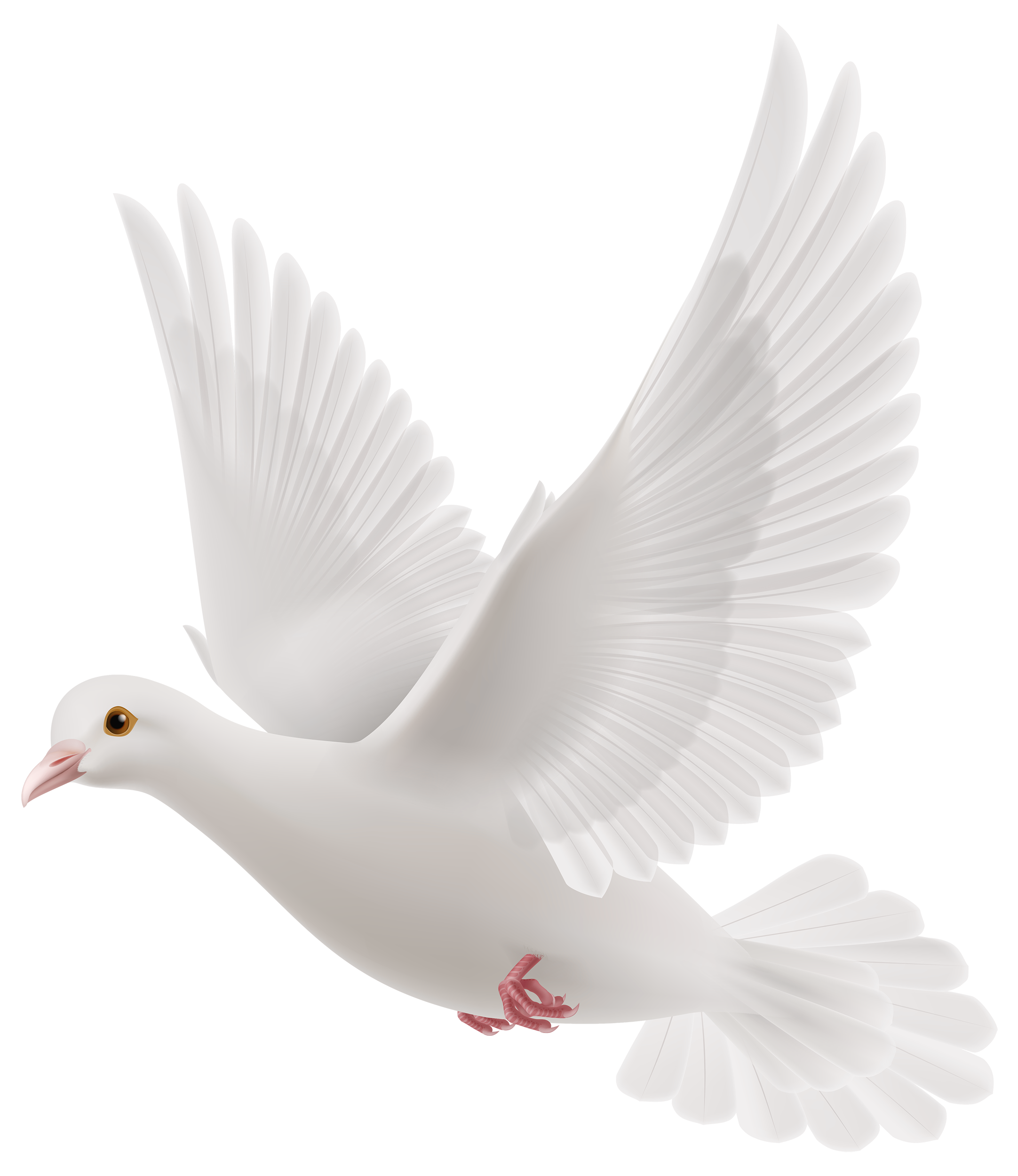 couple doves for wedding png