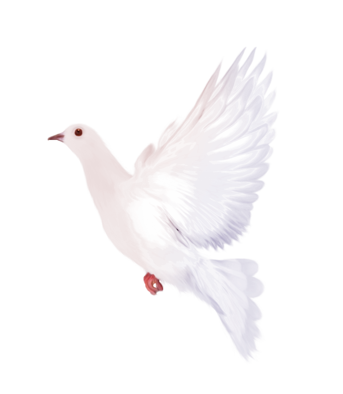 White dove png. Clipart gallery yopriceville high