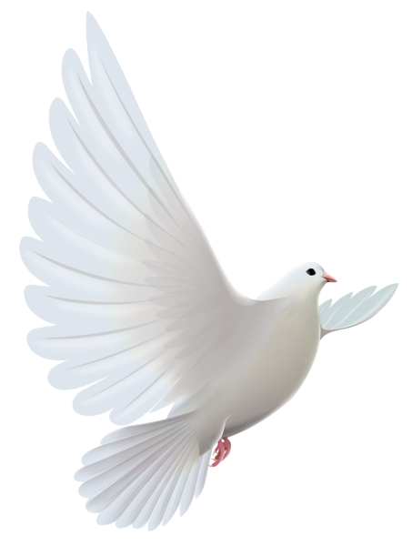 Dove clipart png. White transparent gallery yopriceville