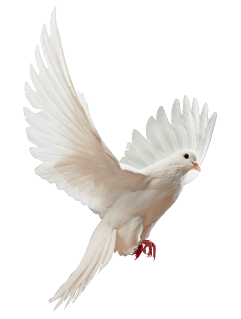 Transparent images pluspng faebfxlpng. Dove png clip library stock
