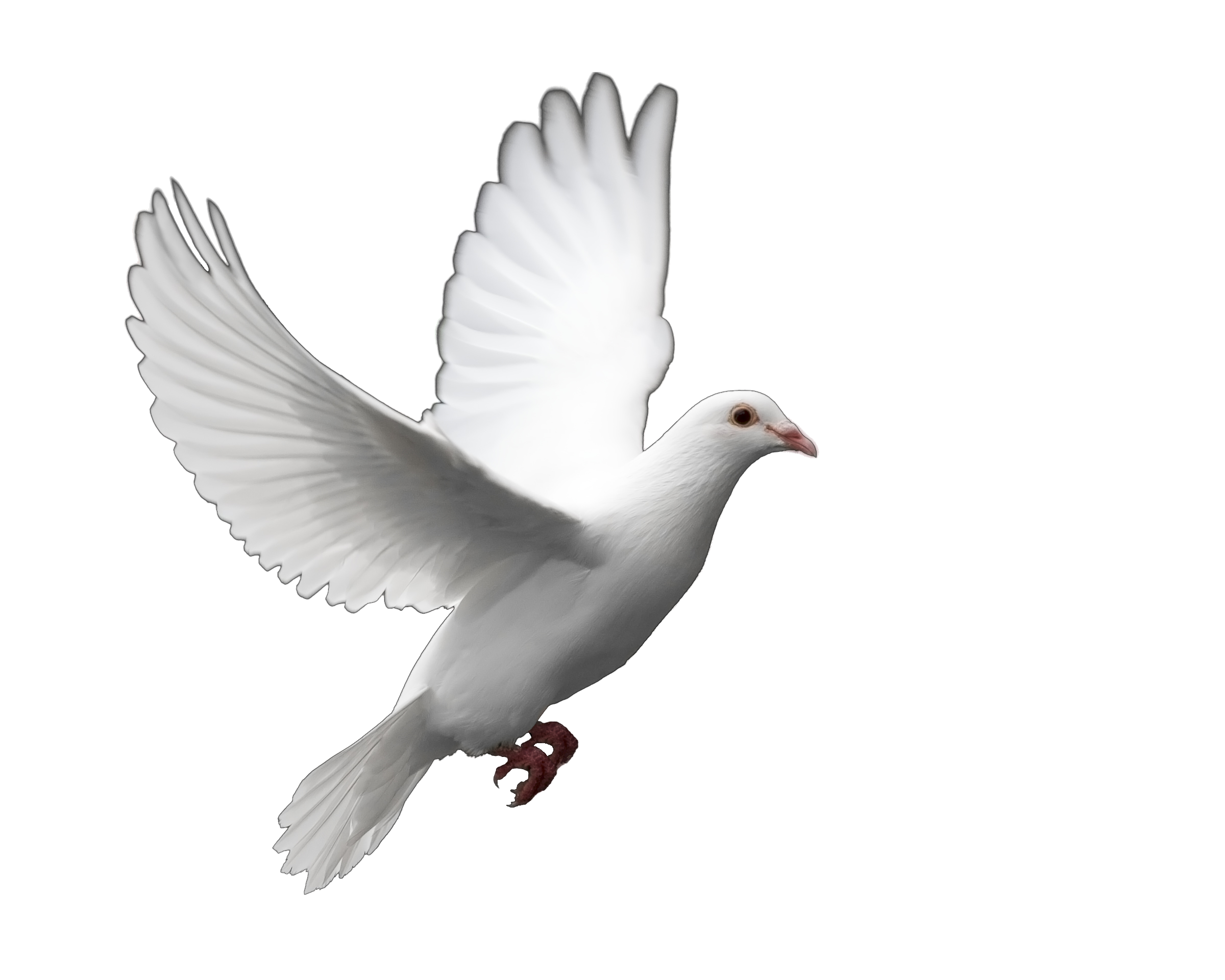 turtle doves png
