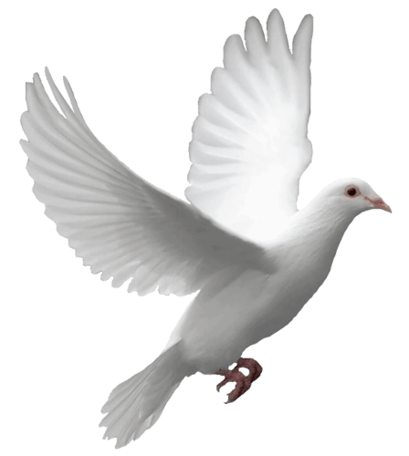 doves flying away png