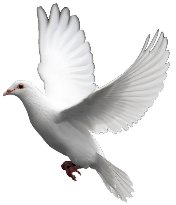 Christian dove png. White images the symbol