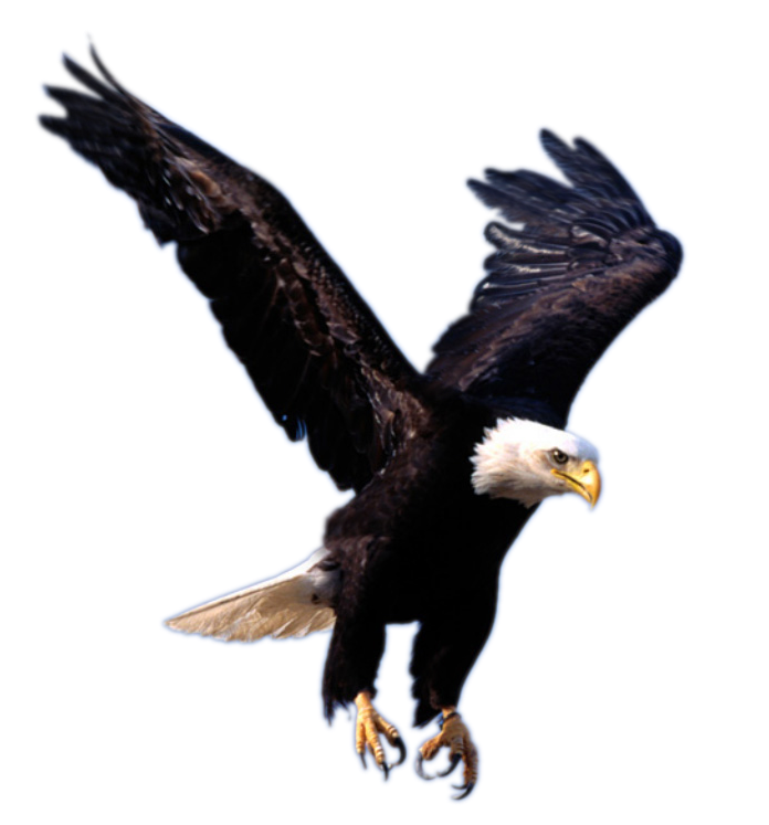 Download png files for free. Psd flying eagle transparent
