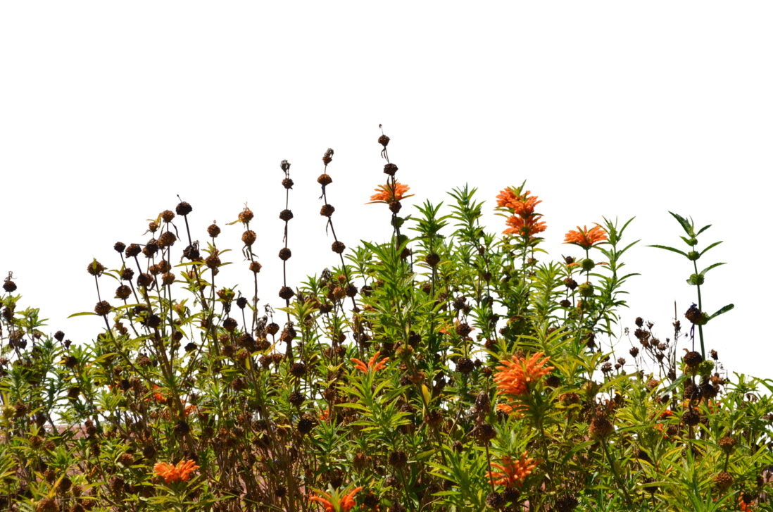 Row of flowers png. Wild stock photo by