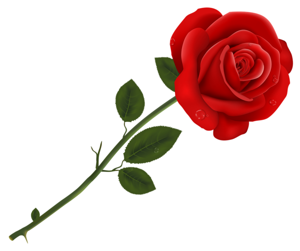 Download transparent png images. Red rose clipart gallery