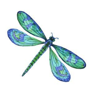 Dragonfly clipart. Blue google search tattoos image royalty free library