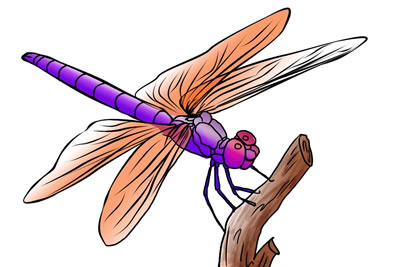 Insects clipart dragonfly. Free clip art