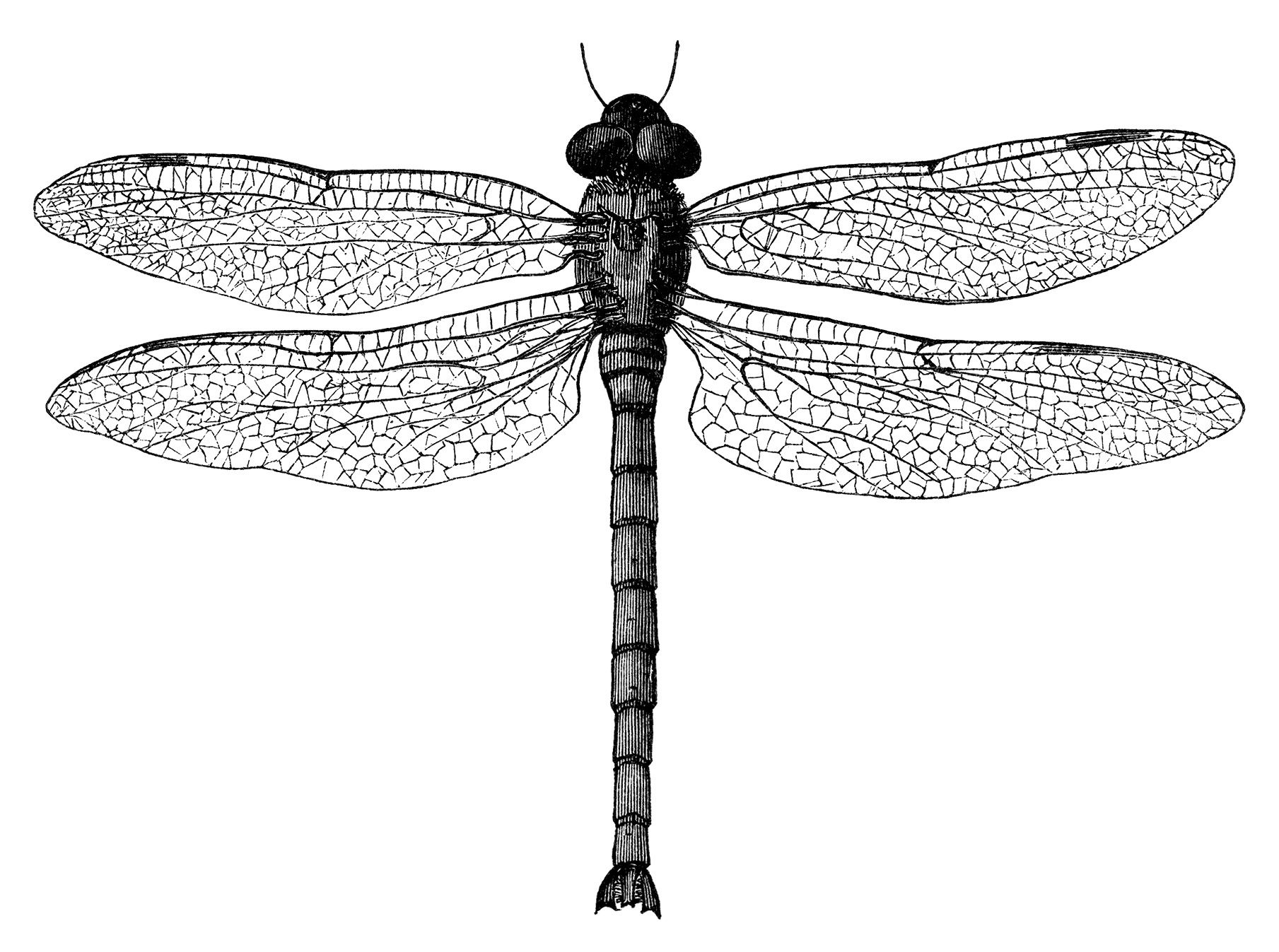 Dragonfly clipart dragonfly tattoo. Black and white clip