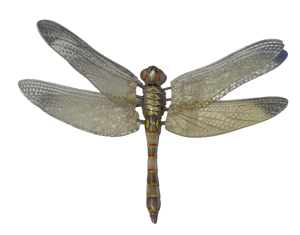 Dragonfly clipart transparent background. Png