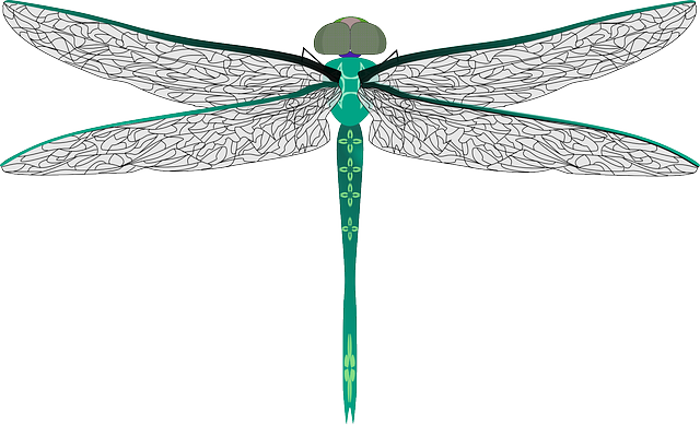 dragonfly transparent dragon fly