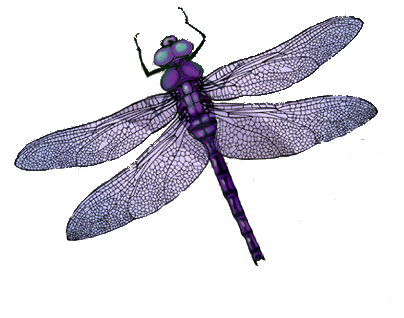 Dragonfly transparent avatar. Dundjinni mapping software forums