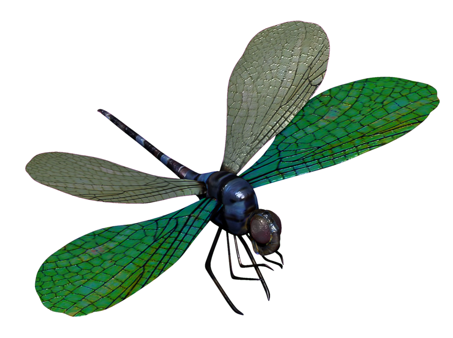 Dragonfly transparent blue. D model by toysoldierthor