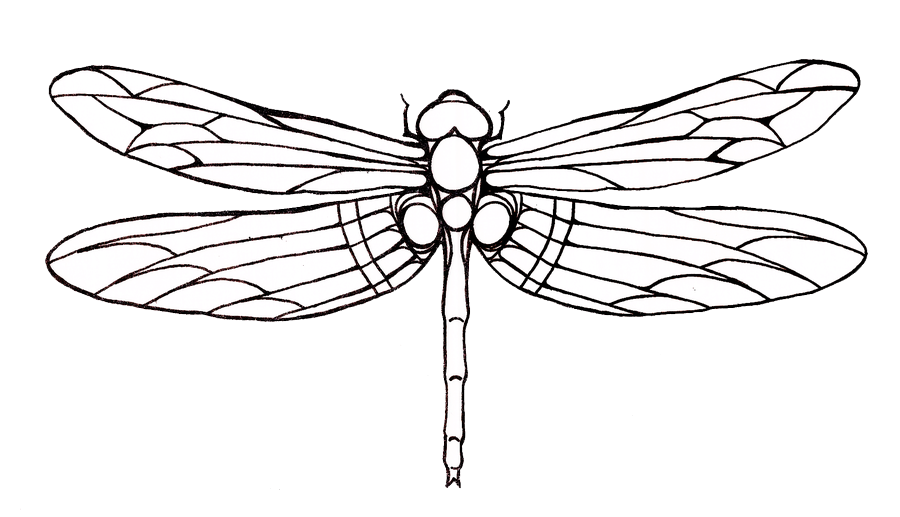 lilypad drawing dragonfly