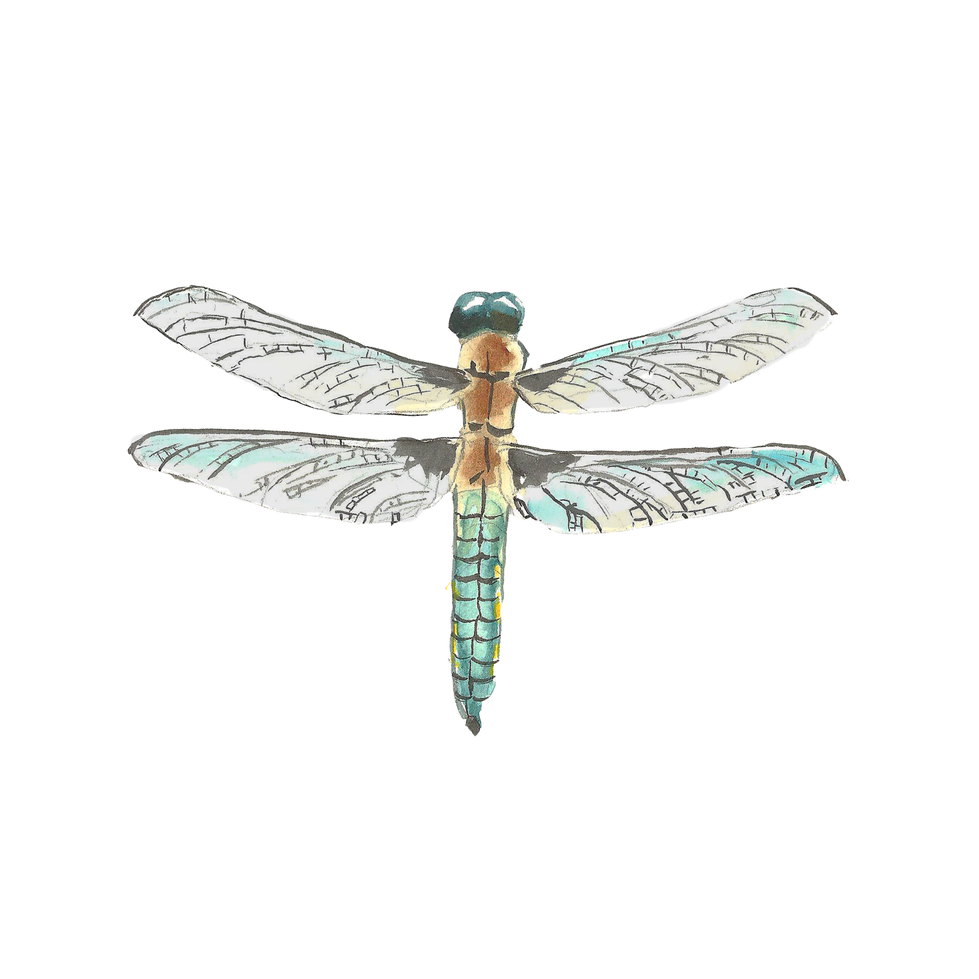 Lilypad drawing dragonfly. Watercolor painting transprent png