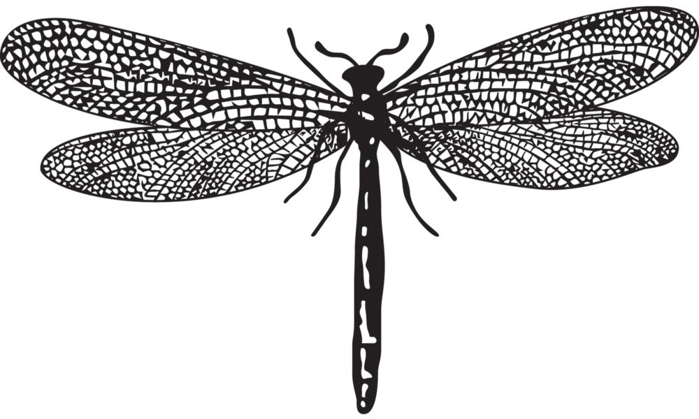 Dragonfly transparent green black png royalty free download
