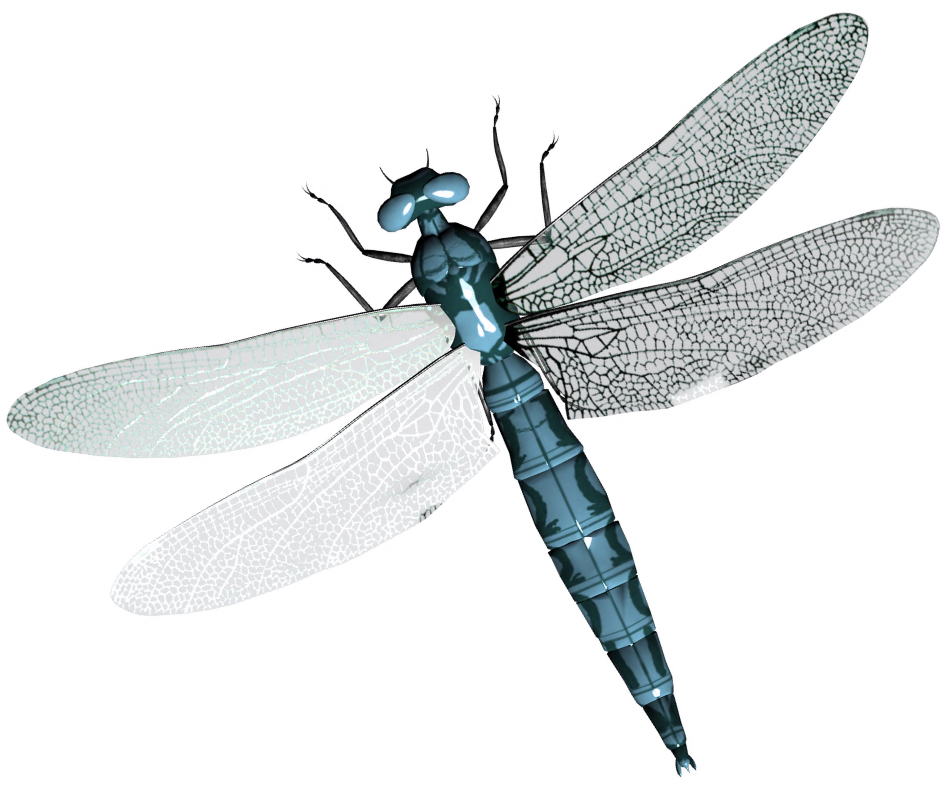 Dragonfly transparent high resolution. In png web icons