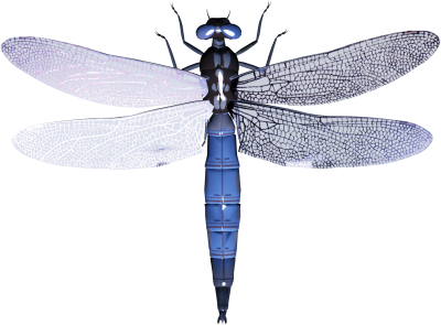 Dragonfly transparent high resolution. Download tattoos free png