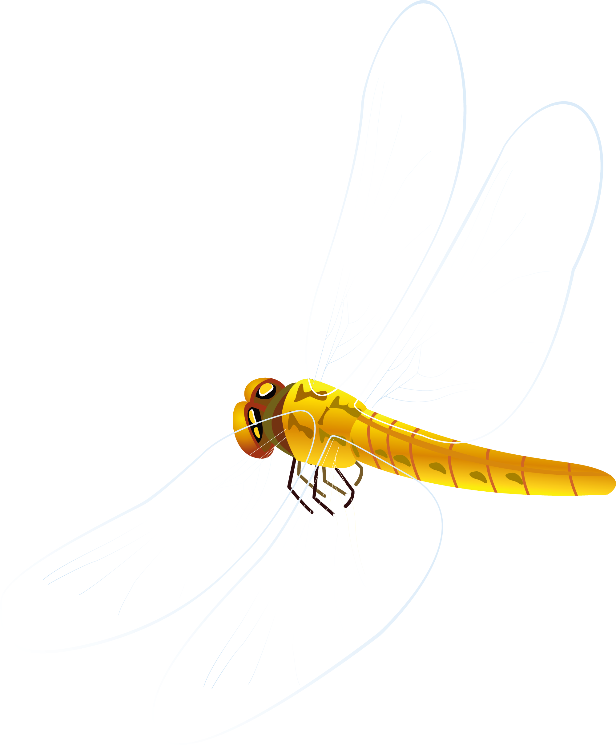 Dragonfly transparent orange. Insect yellow pollinator pest