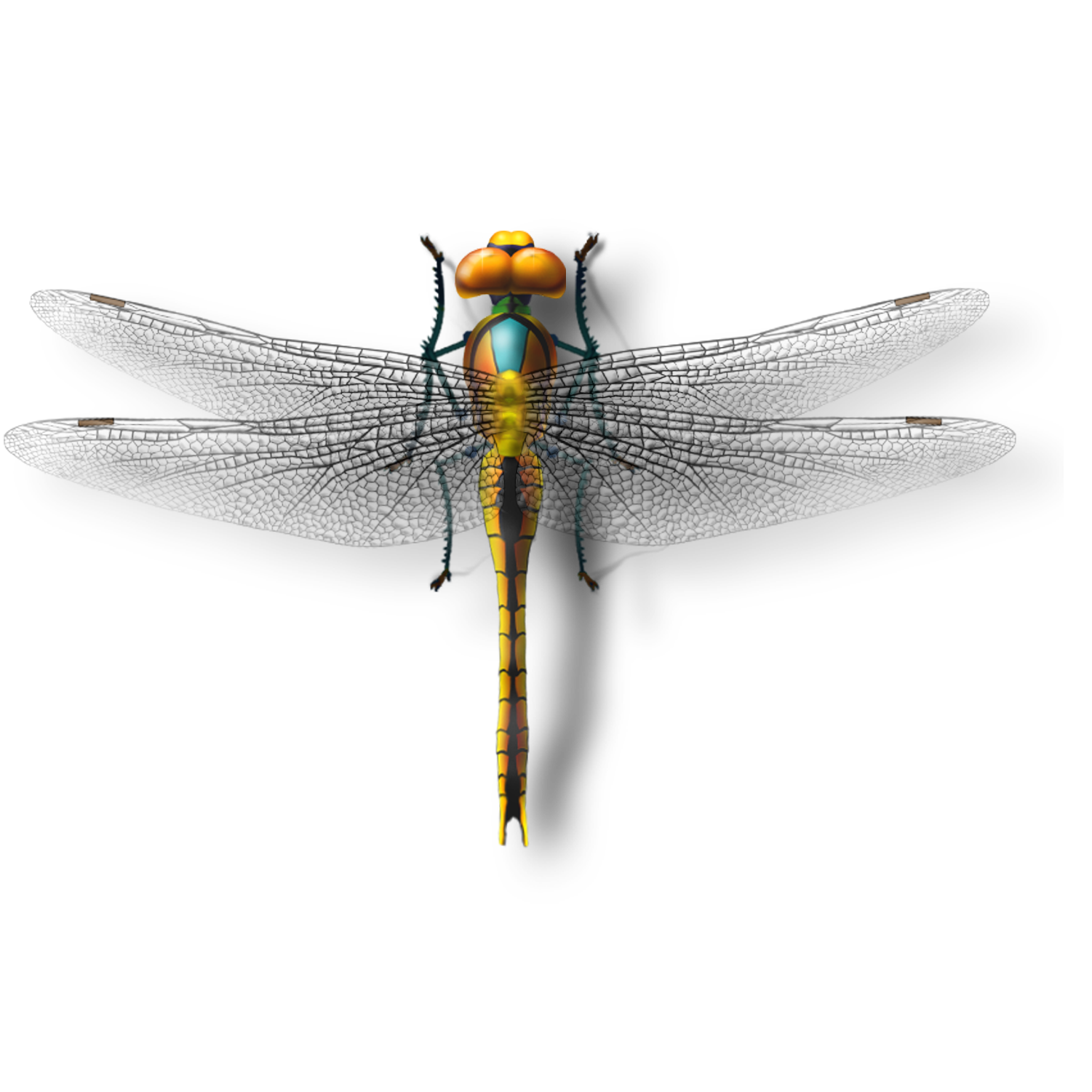 Dragonfly transparent photography. Insect download model transprent