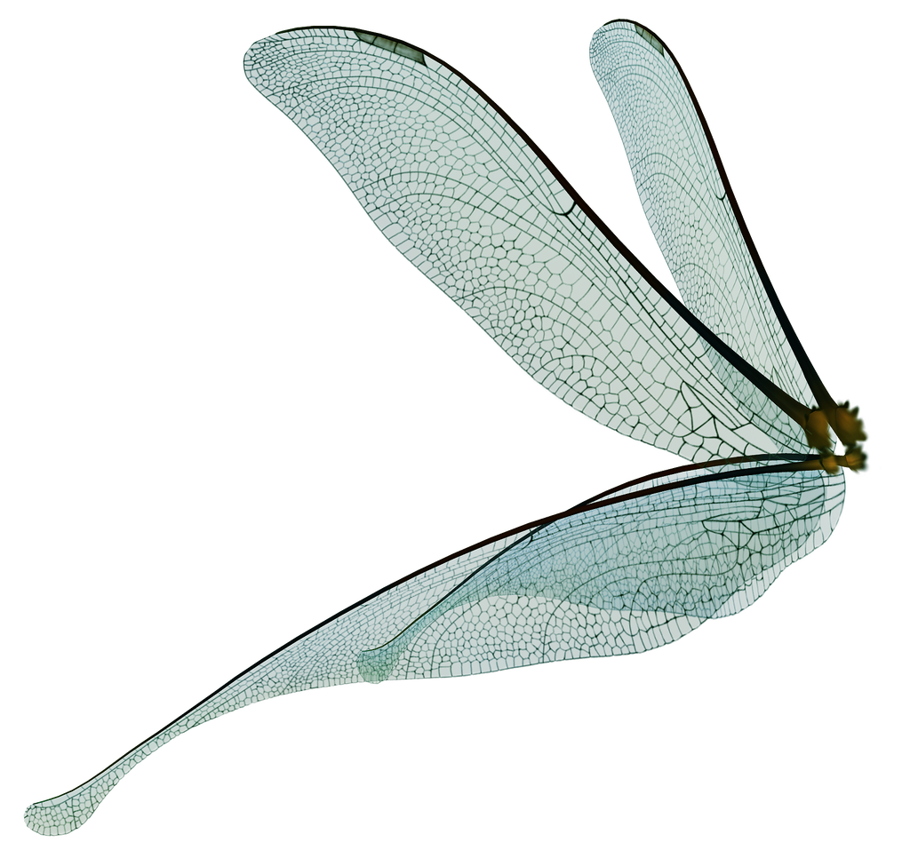 Dragonfly transparent avatar. Unrestricted fairy wings render