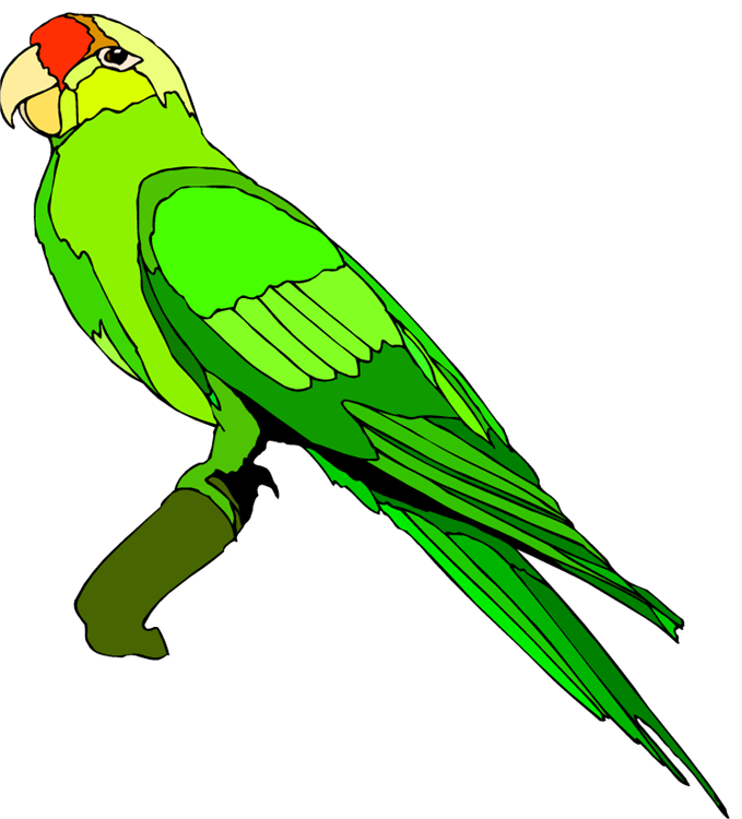 Drawing alphabet parrot. Wild bird clipart at