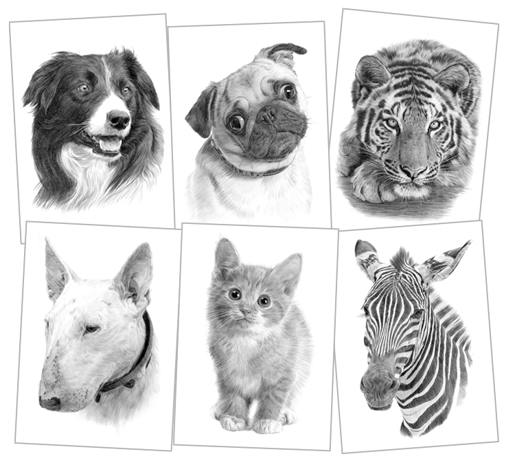 Drawing artwork. Pet portraits pencil drawings