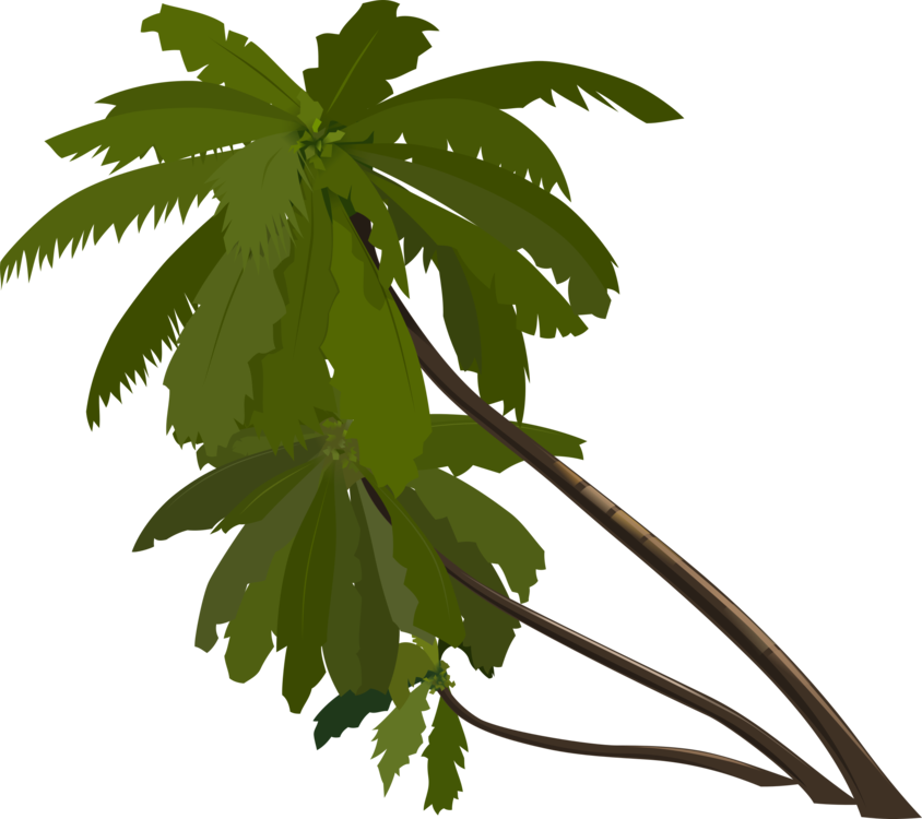 Drawing beach coconut tree. Palm trees download computer